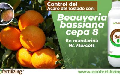 Eficacia de Beauveria bassiana (BaB 8®) en el control del ácaro del tostado Phyllocoptruta oleivora en cultivo de mandarina var. W. Murcott