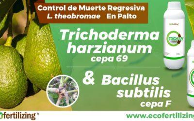 EFICACIA DE LOS PRODUCTOS BAC F (Bacillus subtilis) Y TRICH 69 (Trichoderma harzianium cepa 69) EN EL CONTROL DE Lasiodiplodia theobromae EN PALTO