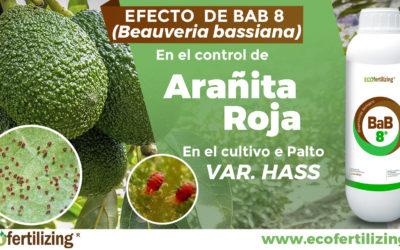 EFICACIA DEL PRODUCTO BAB 8 (Beauveria bassiana) EN EL CONTROL DE Oligonychus sp. EN EL CULTIVO DEL PALTO var.HASS