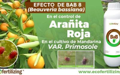 EFICACIA DEL PRODUCTO BAB 8 EN EL CONTROL DE Panonychus citri EN EL CULTIVO DE MANDARINA var. Primosole
