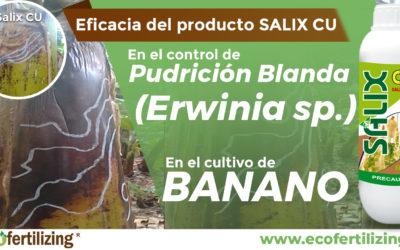 EFICACIA DEL PRODUCTO SALIX CU EN EL CONTROL DE Erwinia sp. EN EL CULTIVO DE BANANO