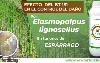 EFICACIA DE Bacillus thuringiensis (BT 151) EN EL CONTROL DEL DAÑO POR Elasmopalpus lignosellus EN TURIONES DE ESPÁRRAGO