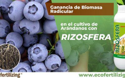 Efecto del producto Rizósfera ® en la ganancia de biomasa radicular fresca del cultivo de arándano var. Biloxi