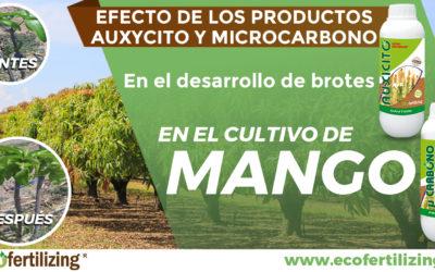 EFECTO DE LOS PRODUCTOS AUXYCITO Y MICROCARBONO EN EL DESARROLLO DE BROTES EN EL CULTIVO DE Mangifera indica.