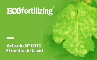 N° 0013: El mildiú de la vid – Plasmopara viticola
