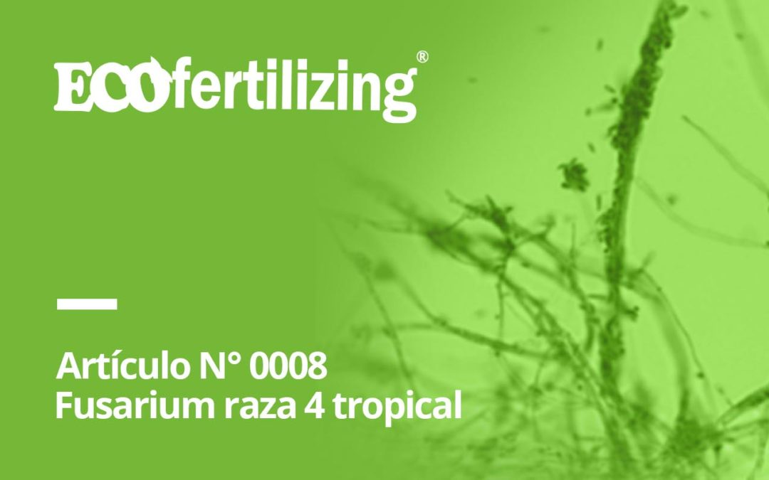 N° 0008: Fusarium oxysporum f sp cubense raza 4 Tropical