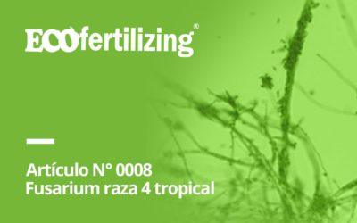 N° 0008: Fusarium oxysporum f sp cubense raza 4 Tropical