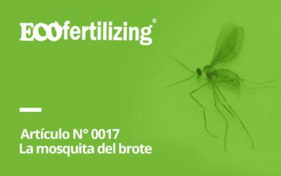 N° 0017: La mosquita del brote o caracha en Capsicum Prodiplosis longifilia