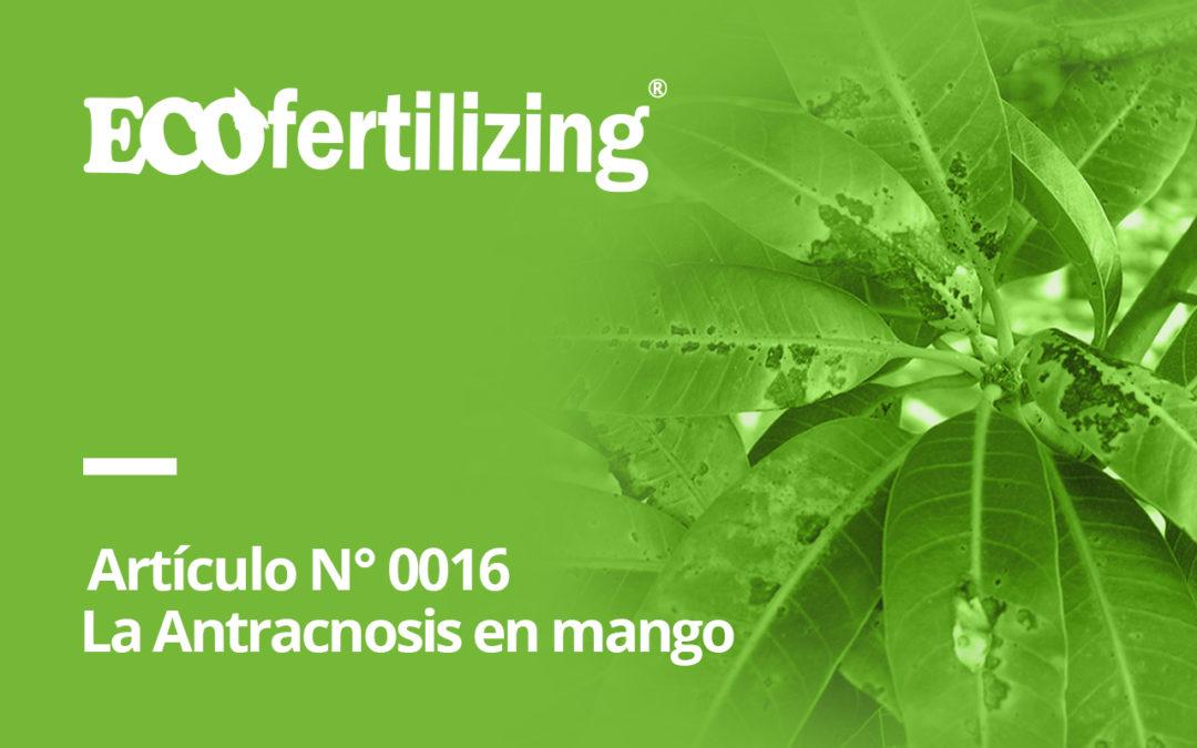 N° 0016: La Antracnosis en mango Colletotrichum gloeosporioides