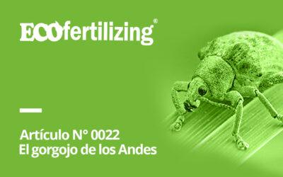 N° 0022: El gorgojo de los Andes Premnotrypes  sp.