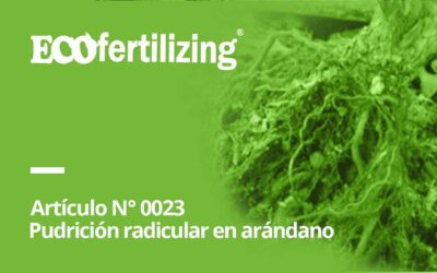 N° 0023: La pudrición radicular en arándano Phytophthora cinnamomi