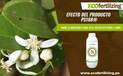 Eficacia de Pseudomonas putida  (PS168®) SOBRE LA INDUCCION FLORAL EN EL CULTIVO DE Citrus x limón.