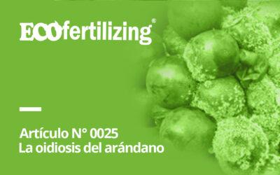 N° 0025: La oidiosis del arándano   Microsphaera vaccinii