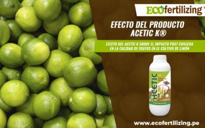 Efecto del producto ACETIC K® sobre el impacto post cosecha en la calidad de frutos en el cultivo de limón.